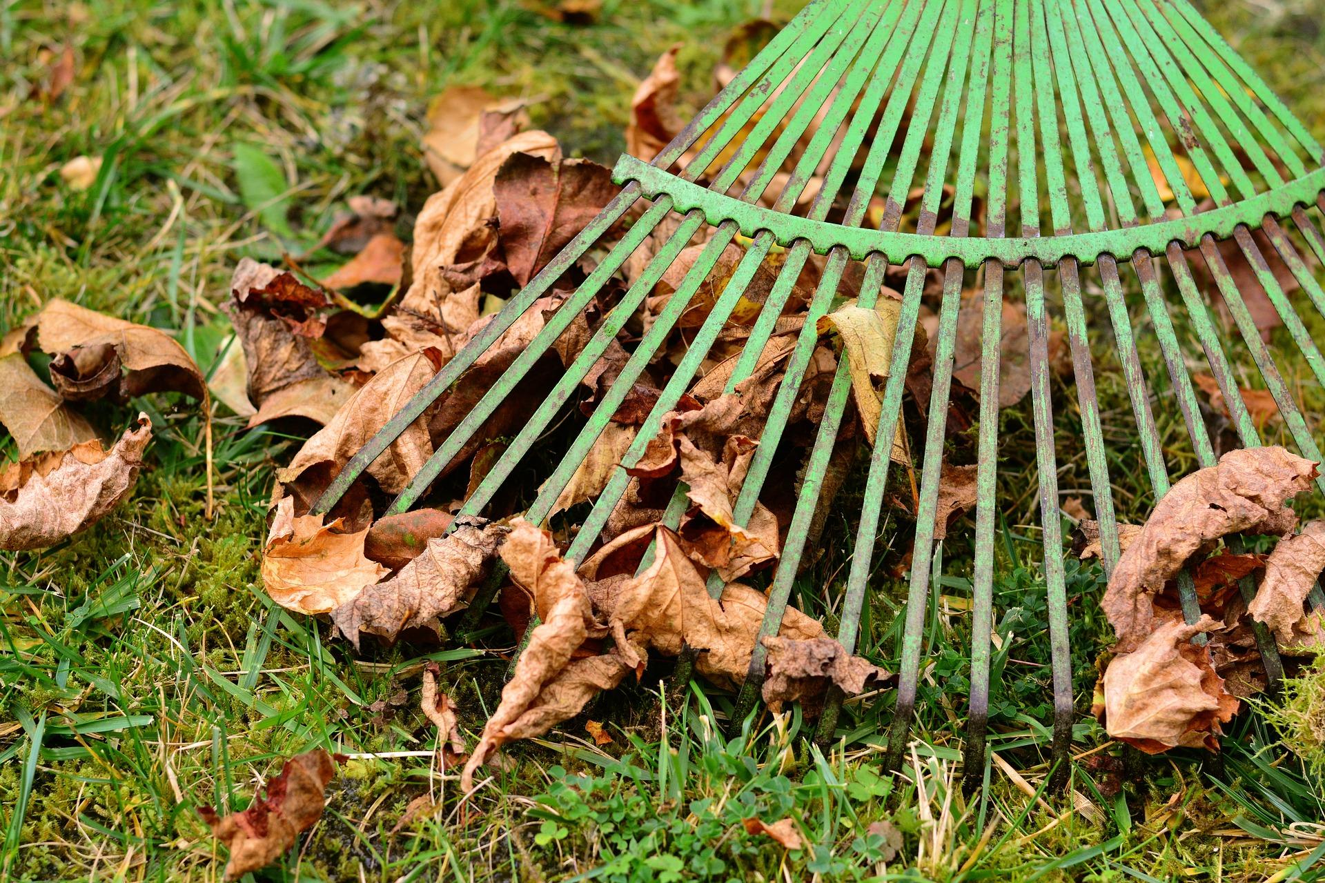 Gardener racking leaves